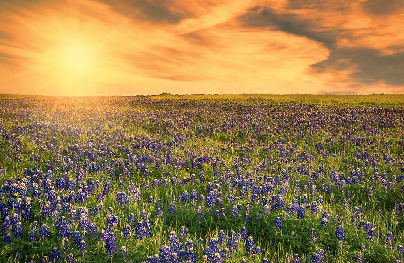Wildflowers Near Vallejo | Avery Greene Honda | Vallejo, CA